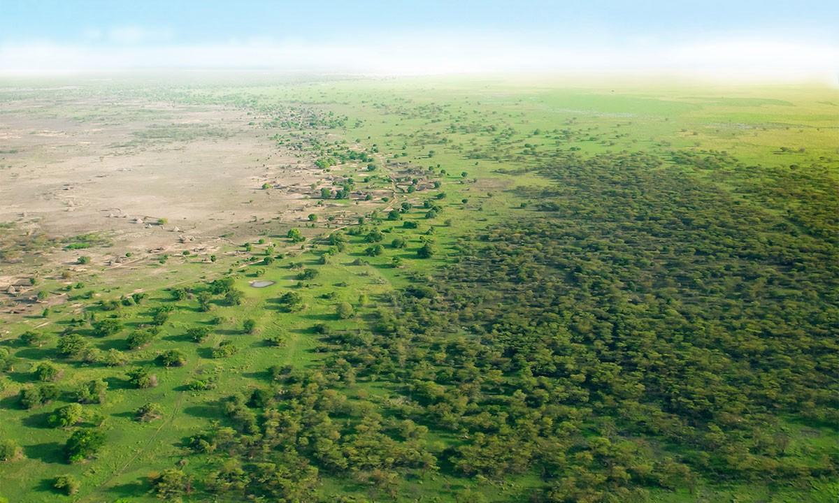 Timberland, Gelecek 5 Yılda 50 Milyon Ağaç Dikecek 1