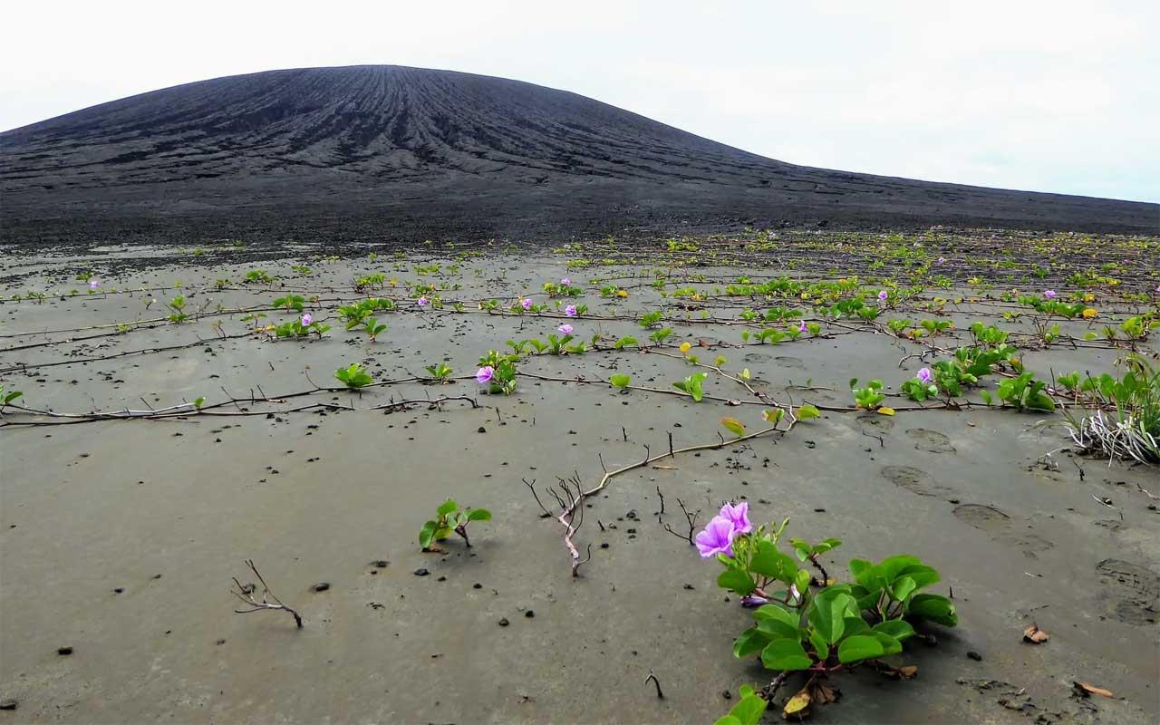 A mais nova ilha do mundo está coberta de lama e vegetação misteriosas