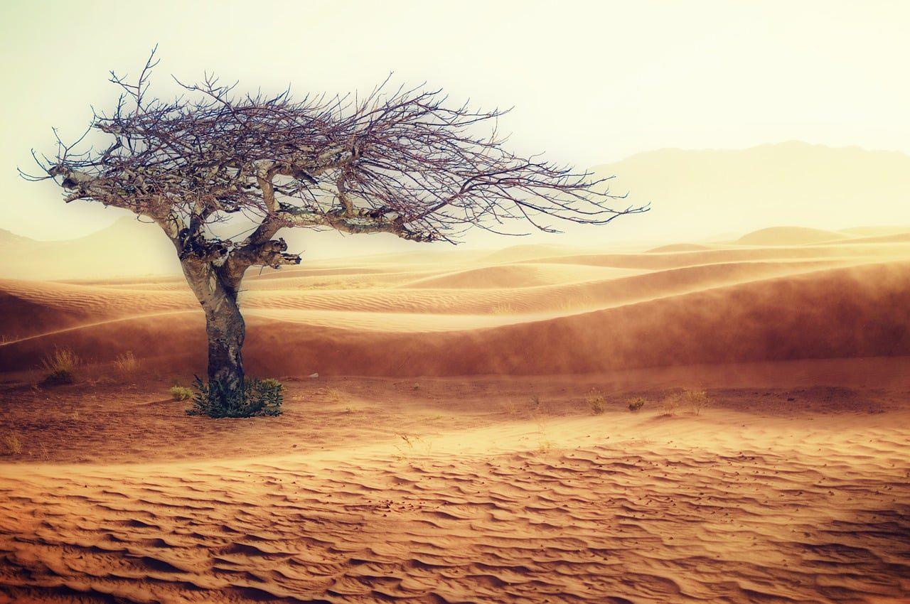 A sustentabilidade ou as mudanças climáticas estão por trás da busca por novas tecnologias?