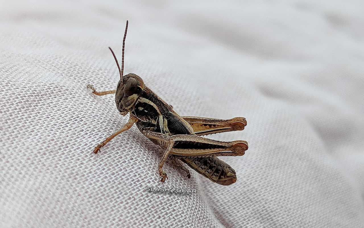 Estudo mostra 100% de extinção de insetos em 100 anos