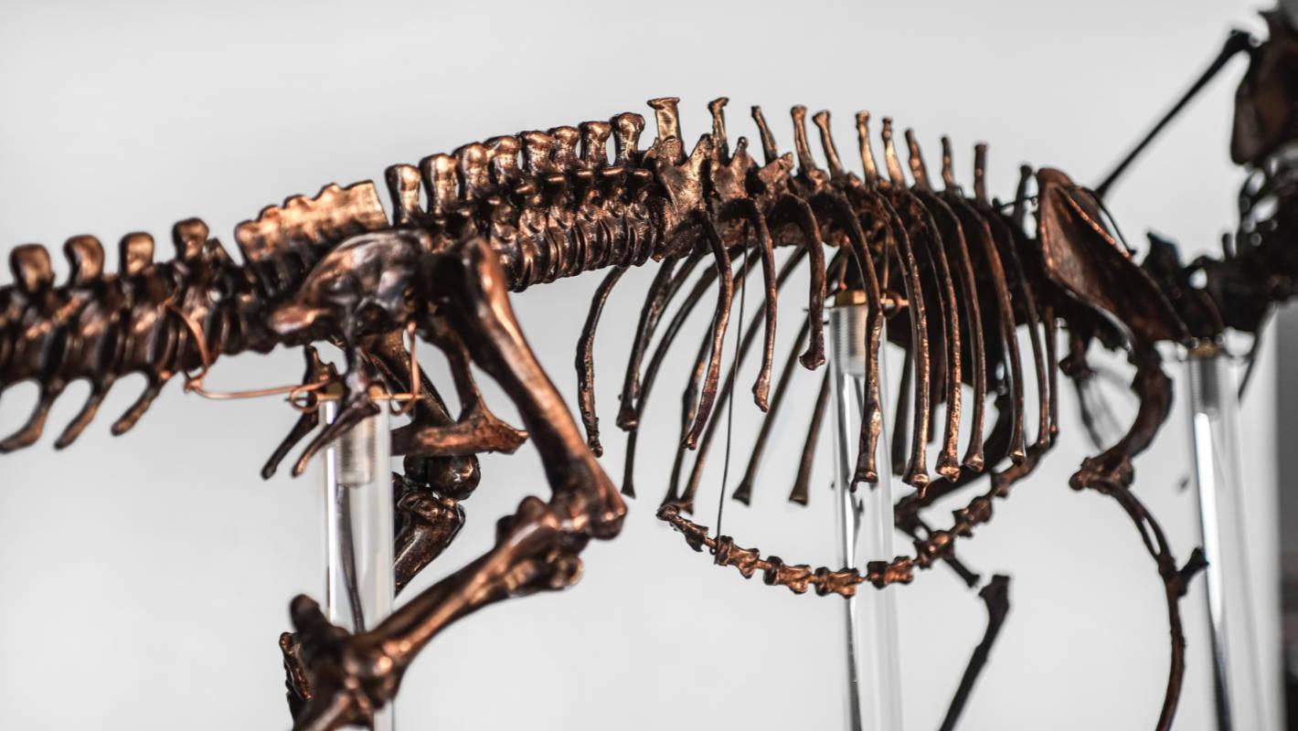 Fêmur fossilizado revela caso de câncer ósseo de 240 milhões de anos