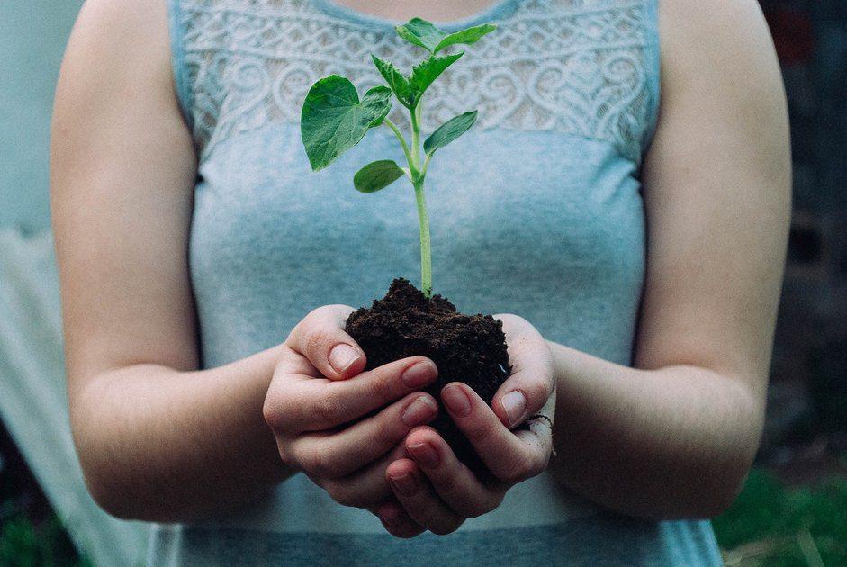 O fiapo de bolso planta mais 1.000 árvores com o Resideo