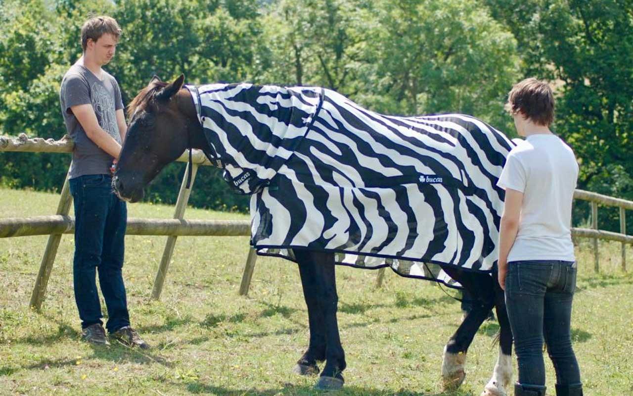 Researchers put a horse in a zebra costume for science