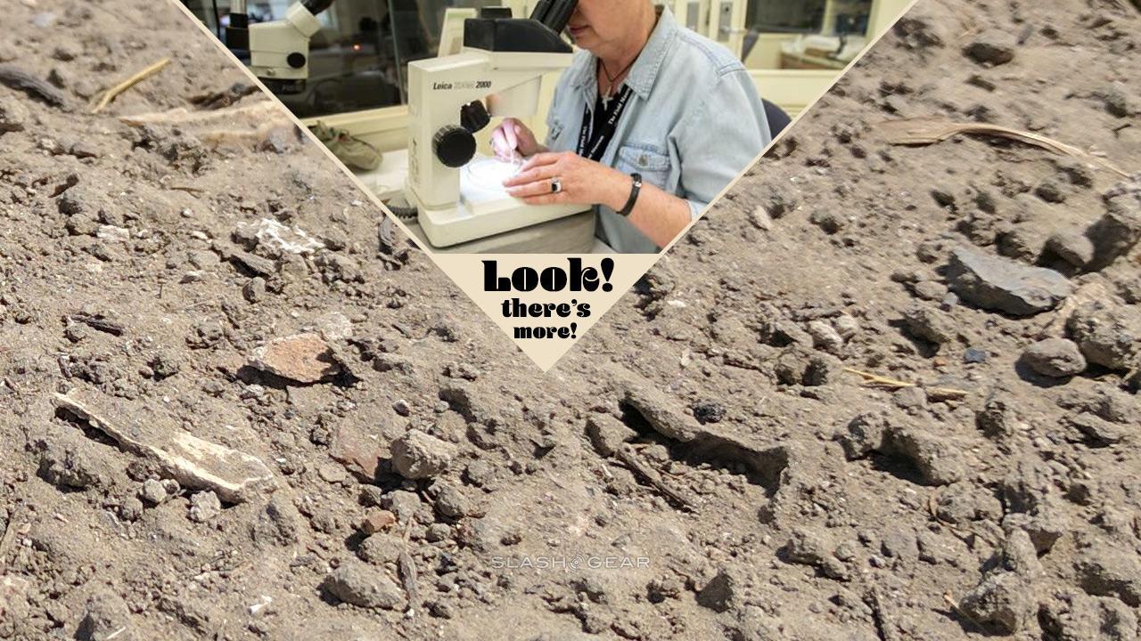 Sobras de Sue T. Rex produzem nova criatura em Galaga